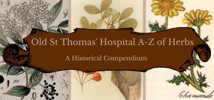 Old St Thomas' Hospital A-Z of Herbs: A Historical Compendium
