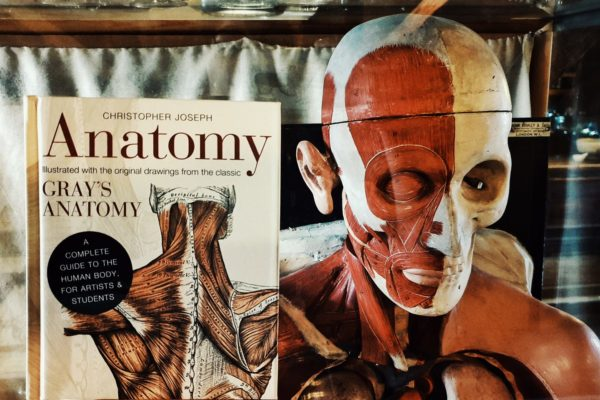 A still life of a book on Anatomy next to our Anatomy model