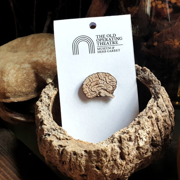 Small brain brooch in a still life in the museum