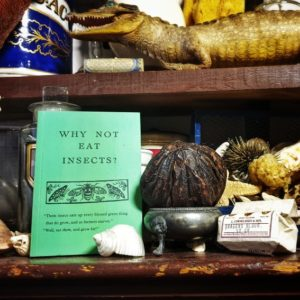 "A still life showing different taxidermy animals and a book titled ""Why not eat insects""."