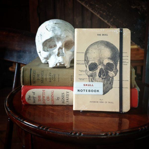 Still life of skull notebook and skull