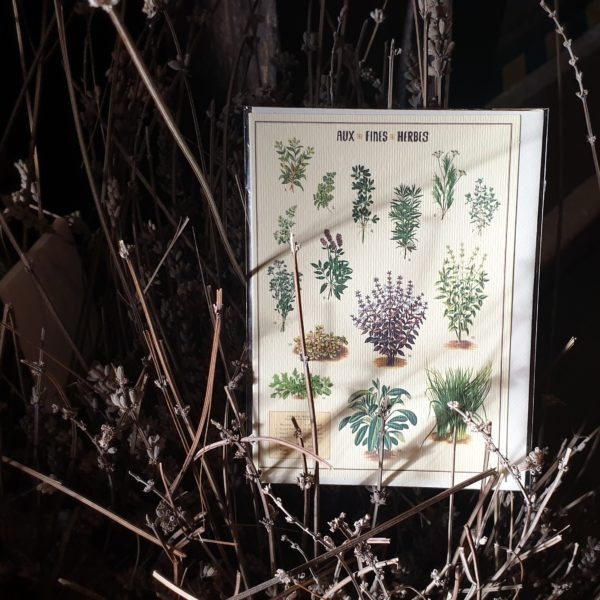 Herbal Greeting Card Still Life