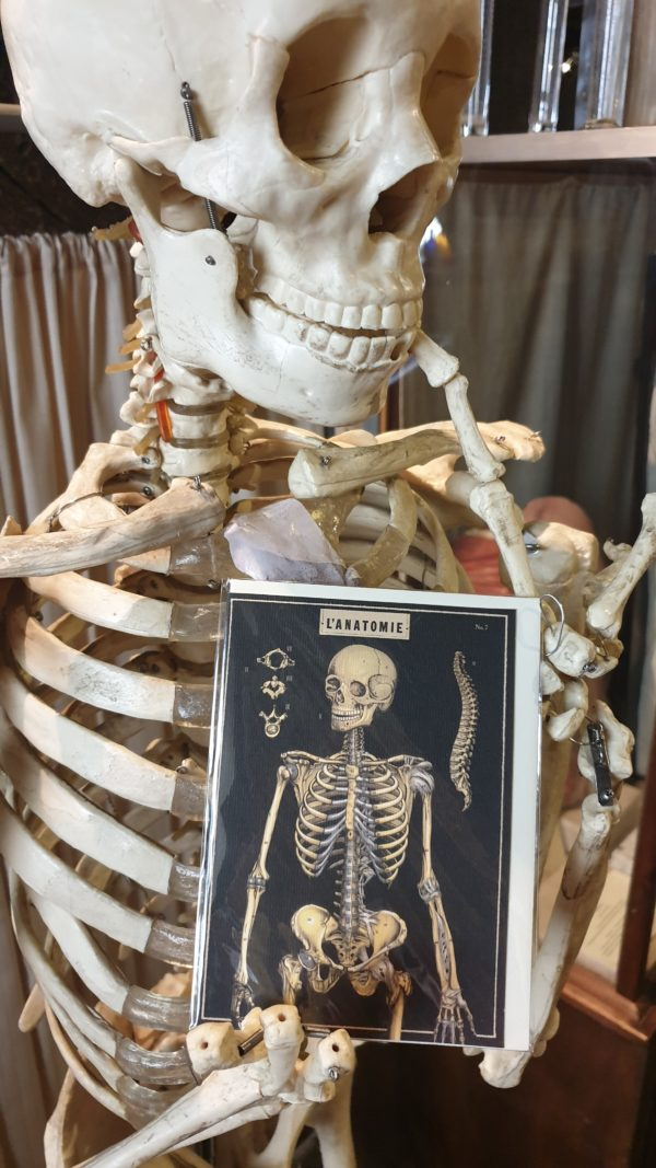 Still life of skeleton and greeting card
