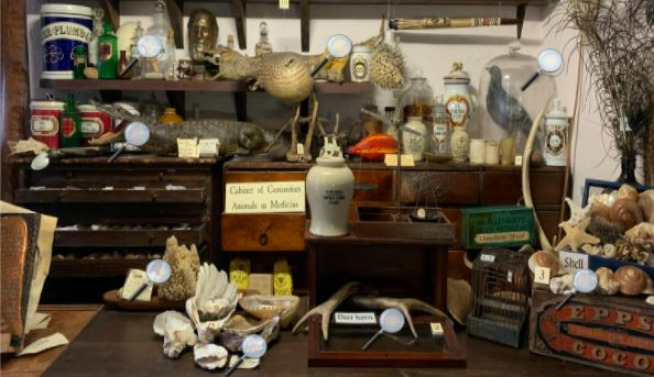 Explore the Cabinet of Curiosities